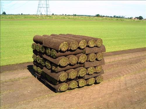 C sped natural en tepes para toledo tepes juli n - Cesped natural ...