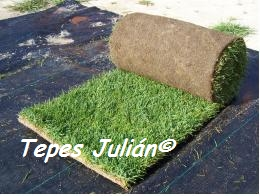 C sped ciudad real tepes juli n - Plantar cesped natural ...