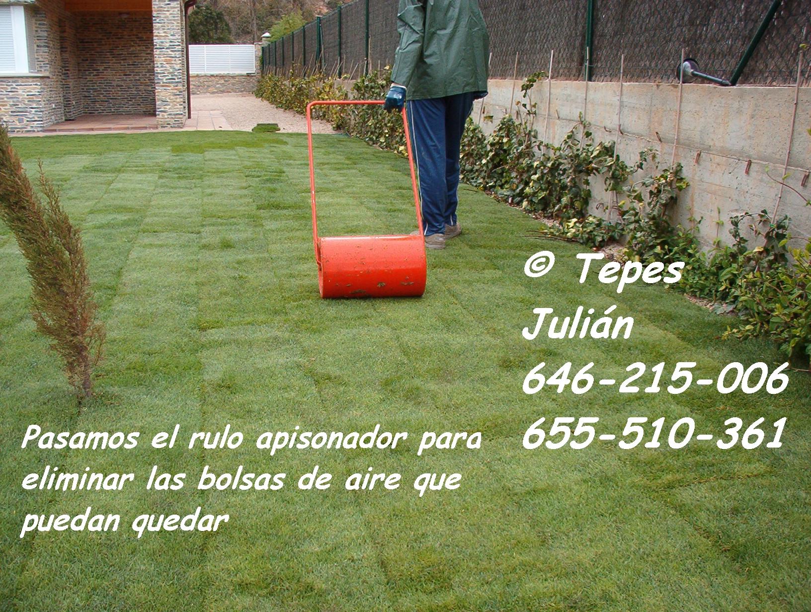 C sped natural tepes juli n for Como plantar cesped natural