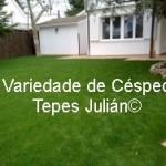Variedade de Césped. Tepes Julián.
