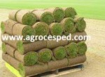 Agrocesped Césped Natural