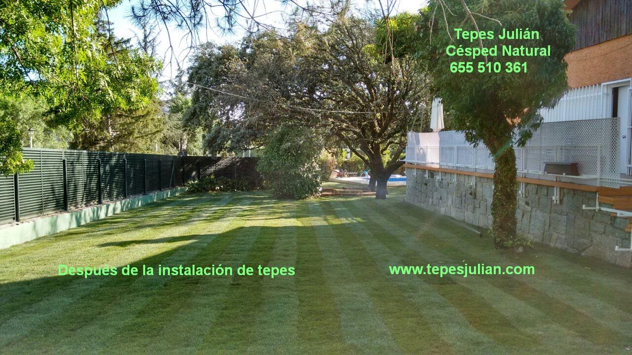 Instalaci n de tepes de c sped natural tepes juli n for Tepes de cesped baratos