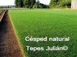 Novedades tepes juli n for Tepes de cesped baratos