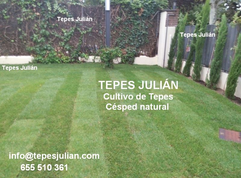 C sped natural o c sped artificial tepes juli n - Cesped natural o artificial ...
