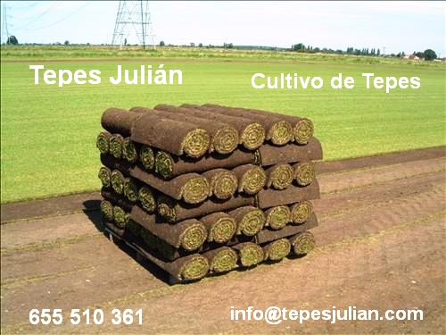 Siembra de semillas tepes de c sped natural tepes juli n for Tepes de cesped baratos