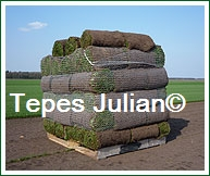 Palet de césped natural Tepes Julián
