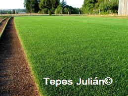 Cesped natural en tepes