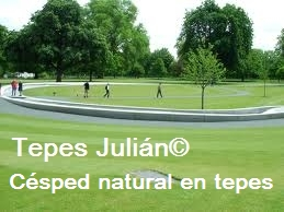 Césped natural