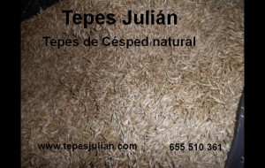 Semillas Tepes Julián
