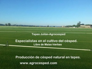 Gestión de Malas hierbas