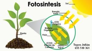 Fotosíntesis: concepto y factores