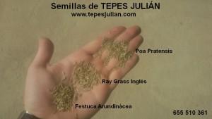 Siembra de semillas
