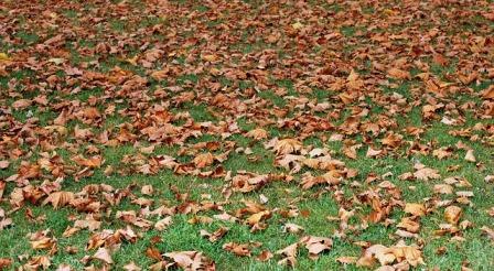 Césped cubierto de hojas secas